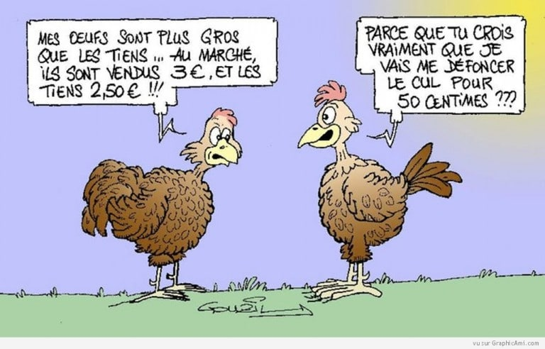 poules-discussion-oeufs